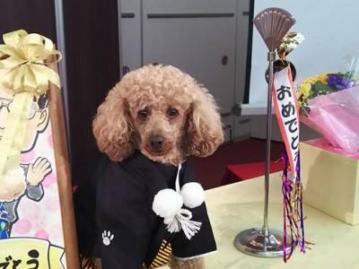 トイプードルの警察犬ことポッキー君
