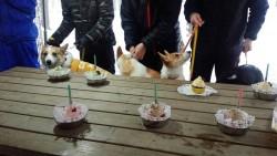 ミントケーキ
