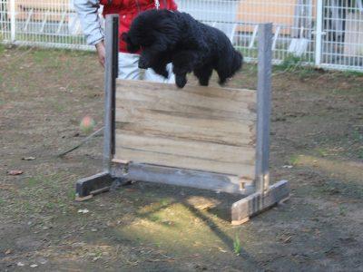 ☆お泊り訓練犬たち